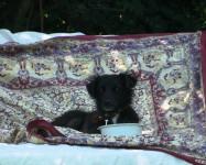 Simón, nuestro Perro vegano